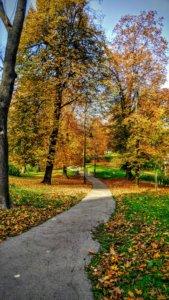 aleja drzew w parku