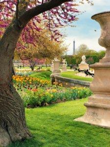 drzewa i kwiaty w parku