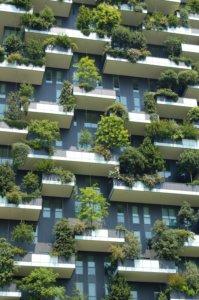 drzewa na balkonach